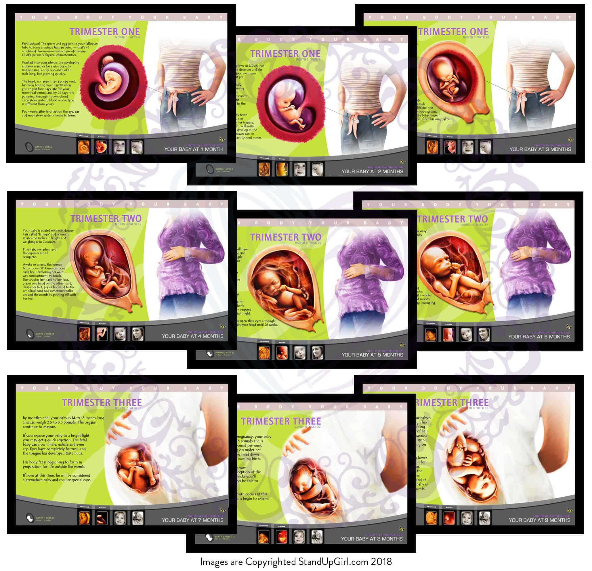 Fetal Posters